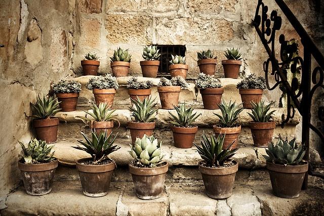 Sukkulenter og kaktusser